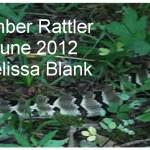 2012JuneMBlankRattler