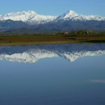 Rice Fields, Vercelli.  Alps in background