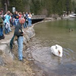 Yeah, the kids thought this was SOO funny.  Swan attack.